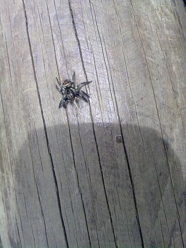 Araña con alas de mosca saliéndole de las fauces