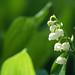小粒な花々