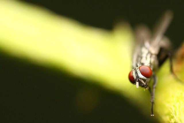 Fly 5