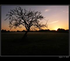 The Plum Tree. (Picture post.) Tags: green nature sunrise landscape meadow paysage arbre soe fruittree plumtree supershot diamondclassphotographer flickrdiamond mygearandmepremium