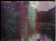 botanic pond double (chachlate) Tags: brooklyn 35mm garden kodak doubleexposure pony koi vodka brooklynbotanicgarden destroyed soaked brooklynbotanicalgarden modelc abusedfilm luksusowa filmdestroyer