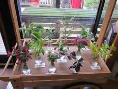 blooms to look for (terryhadalittlelamb) Tags: flowers ohio arboretum oh blooms dawes