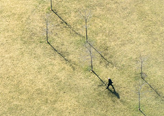 """""""Win, Place and Show"""" No. 2 (Canadapt) Tags: trees shadow toronto man field grass diagonal minimalism sparse canadapt"""