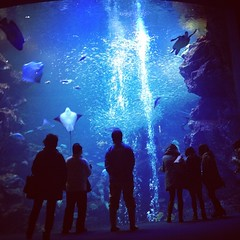 20130311_01_Kyoto aquarium (jam343) Tags: blue silhouette square aquarium kyoto stingray squareformat  hudson  kyotoaquarium iphoneography instagram instagramapp uploaded:by=instagram foursquare:venue=4e06b0d0e4cdefcff6d7f9d0