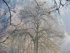 (bernd obervossbeck) Tags: winter nature natur sauerland