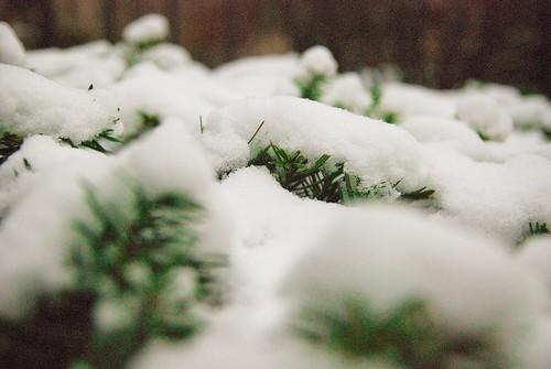 Winter_0052