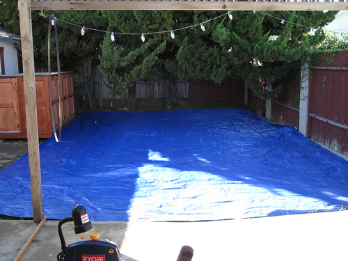 overgrown Hollywood Junipers and yard-sized blue tarp
