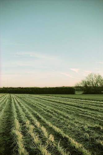 field and sky on Flickr