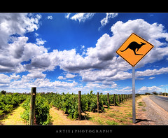 Truly Australia (II) :: HDR (Artie | Photography :: I'm a lazy boy :)) Tags: trees sky nature sign clouds photoshop canon vineyard babies cs2 cloudy earth country australia wideangle kangaroo signage handheld adelaide grasses aussie 1020mm lmao australiaday southaustralia hdr xoxo artie outskirt 3xp sigmalens photomatix tonemapping tonemap 400d rebelxti kissesartie trulyaussie