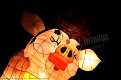 2007-03-03 1138 2007 Taipei Lantern Festival (Badger 23 / jezevec) Tags: festival night lights pig colorful taiwan parade taipei formosa float  hai taipeh boar  lanternfestival 2007  chineselantern  chiangkaishekmemorialhall  republicofchina yearofthepig    aonuevochino  capodannocinese   taiwn chaingkaishek   20070303    tapeh    badger23 shangyuanfestival ftedeslanternes     lyhtyjuhla chinesischeslaternenfest
