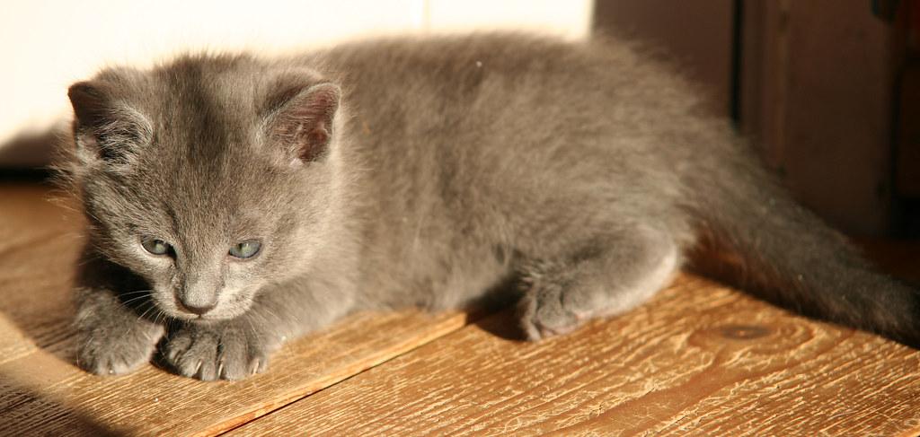 Kittens of Pegusha - Page 2 3244243373_f6a0136f87_b