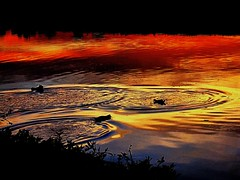 A molten sunset swim (peggyhr) Tags: sunset brazil sky nature water reflections river gold silhouettes ducks explore curitiba wetlands pr ripples peggyhr photoexplore 1964b