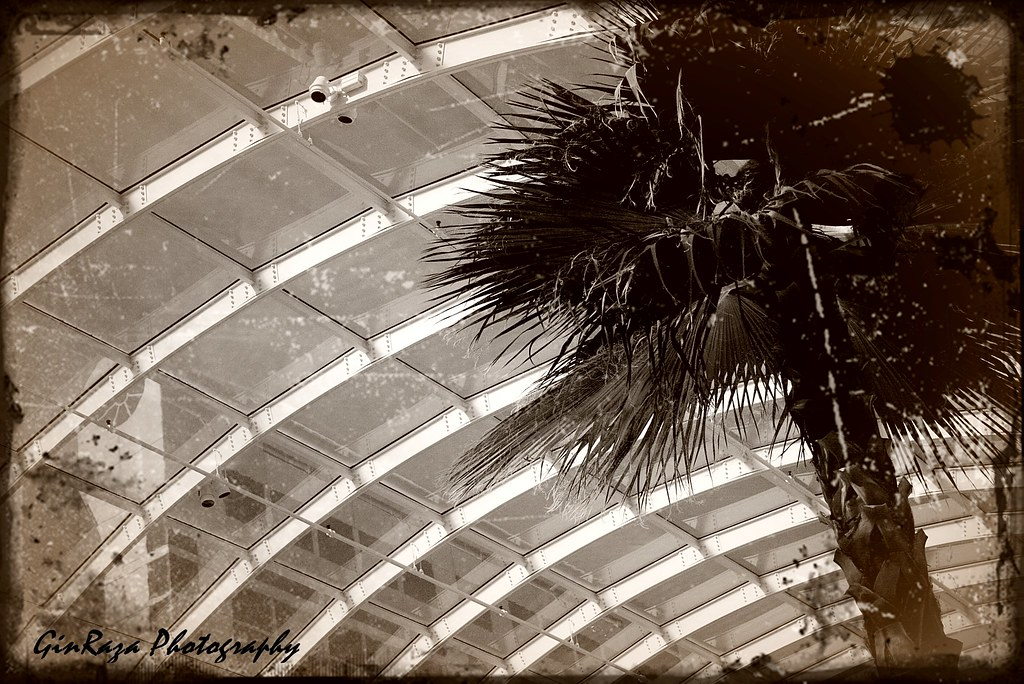 Old fashion palm tree