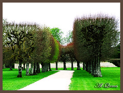 Early Spring (Ben_Qames  G.W.L.K) Tags: wood trees france green nature grass garden spring sticks fuji ben path finepix s9500 spikes blois qames