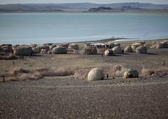 El Molo tribe village in front of Lake Turkana - Kenya (Eric Lafforgue) Tags: africa kenya culture tribal tribes afrika tradition tribe ethnic tribo afrique ethnology tribu eastafrica qunia 6418 lafforgue ethnie  qunia    kea    a