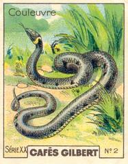 gilbert reptile 3