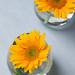 0908 flowers #3