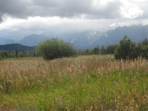 a field. that is pretty.