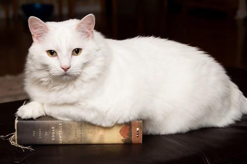 Literary Kitty