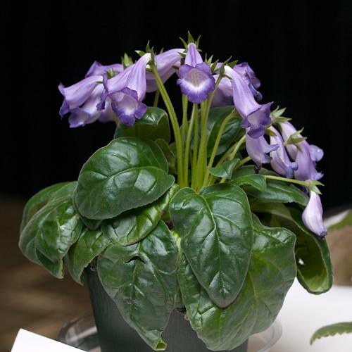 Floriferous #3