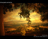 À Descoberta de Vila Flor (VII) (Transmontano) Tags: tree portugal arvores legacy arco texturas textured sépia bragança braganca vilaflor 20fav imagepoetry xoox specialtouch valedavilariça transmontano ilustrarportugal sérieouro spiritofphotography colorsofthesoul artofimages themonalisasmile bestcapturesaoi soulaward sailsevenseas addvf iniciaticaward dantememberbadge portugalmagico