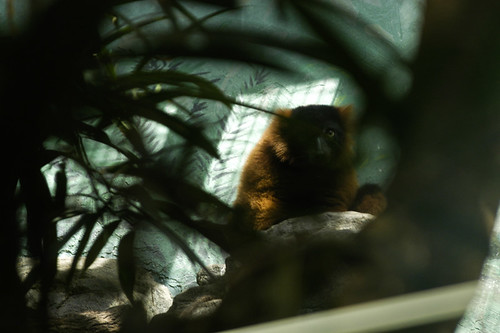 Washington National Zoo