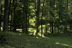 _MG_6387.JPG (zimbablade) Tags: trees sleepyhollow dougmiller videopoem