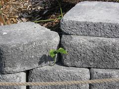 2008-01-27-Stoneleigh-2007-06-05-Kudzu! (russellstreet) Tags: newzealand sculpture auckland kudzu nzl manukau aucklandbotanicalgardens jimwheeler sculpturesinthegarden2007 stoneleighsculpturesinthegarden2007