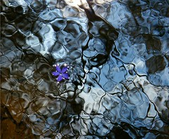 Drowning in Abstract Water (Stanley Zimny) Tags: park flowers lake abstract reflection nature water colors botanical flora seasons purple patterns sunburst drowning sunstars anawesomeshot