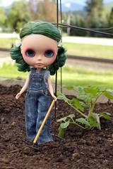 Gardening (141/365)