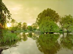 Jericho Park View from Pond (Airchinapilot) Tags: park mediumformat kodak jerichobeach flatbed jerichopark canoscan8400f mamiya645protl kodakektar100 ektar100
