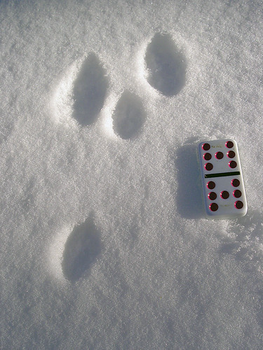bunny tracks and a domino