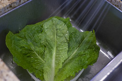 Washing Lettuce