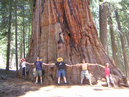 TreeBig