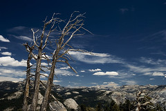 Dead trees on Sentinel Dome, Yosemite National Park (Bram Meijer) Tags: yosemite yosemitenationalpark sentineldome jeffreypine brammeijer