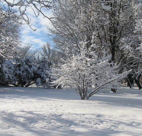 Nature - snowy trees 5