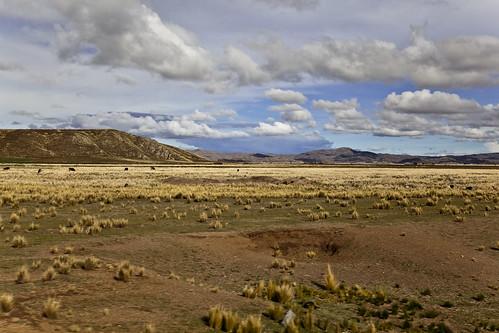 Andean Explorer-9
