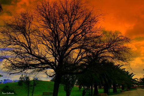 El Árbol (para todos mis amigos de Flickr) por pacogallardo1.