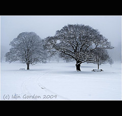 Trees - Encapsulating the Beauty of A Scottish Winter (Magdalen Green Photography) Tags: trees snow scotland cool dundee tracks eerie benches letitsnow tayside snowdrifts snowscene wintry winterscene camperdownpark scottishwinter calmnaturescene scottishwinterscene encapsulatingthebeauty
