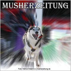 Schlittenhunde-DM 2009 Oberwiesenthal