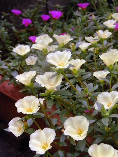 Flower-025
