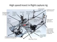 High speed insect in flight capture rig (linden.g) Tags: speed high cross flight insects beam shutter laser external stopshot cognisys