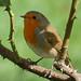 Robin: August 31