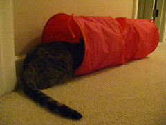 Maggie hanging out in her tunnel
