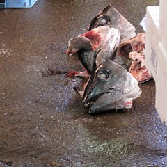 Fish Heads, Tsukiji Fish Market