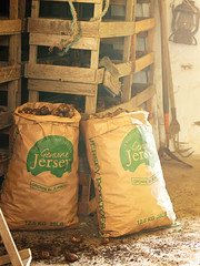 Sacks of Jersey Royals