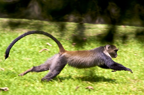 latest images of different monkeys habitat