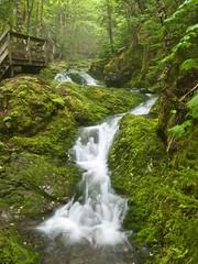 Verdant (Seldom Scene Photography) Tags: canada green forest geotagged waterfall newbrunswick bayoffundy gps legacy dicksonfalls olympuse3 120600mmf2840 maperture