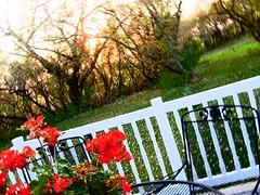 . (Carrots-Gilly) Tags: lighting autumn trees sunset colors contrast blurry backyard deck porch railing tilt brightness enhanced carnations