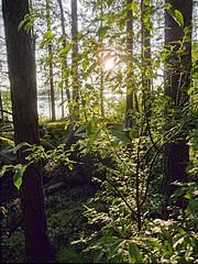 Mkill (Massis_) Tags: light sun lake tree suomi finland soleil lumire lac puu arbre hdr bois jrvi aurinko finlande hdrenfrancais